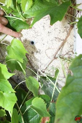 Scellement chimique fischer 18 zonetravaux bricolage d coration outillage jardinage - Scellement chimique fischer ...
