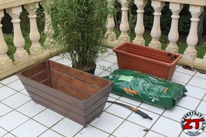 Rempoter une plante (bambou)